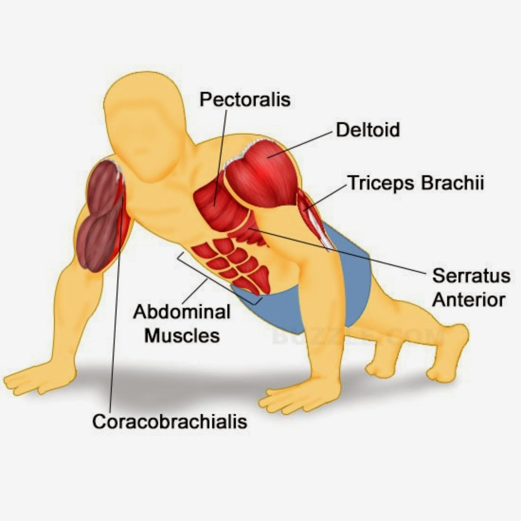 Press Up Routine To Build Muscle