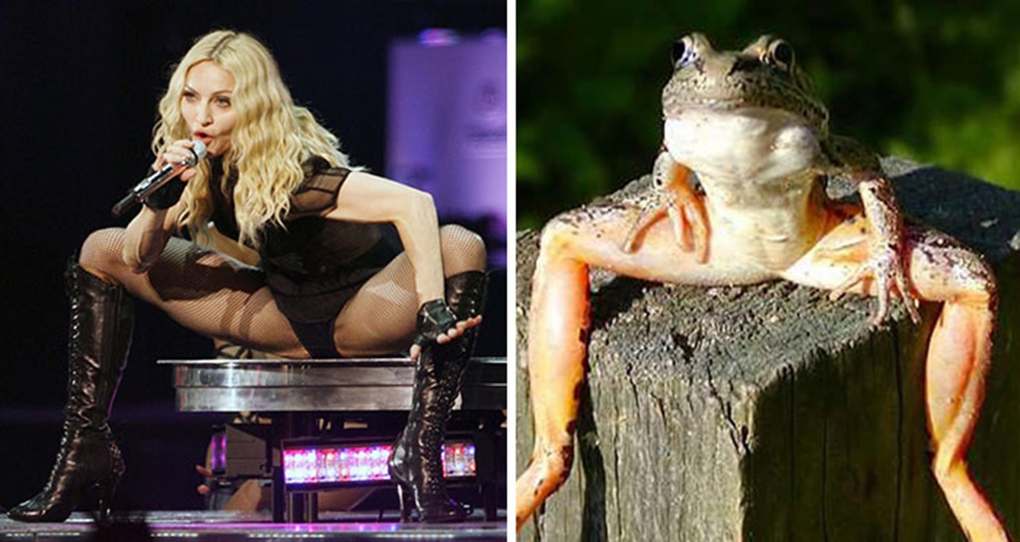14 Madonna Looks Like A Frog