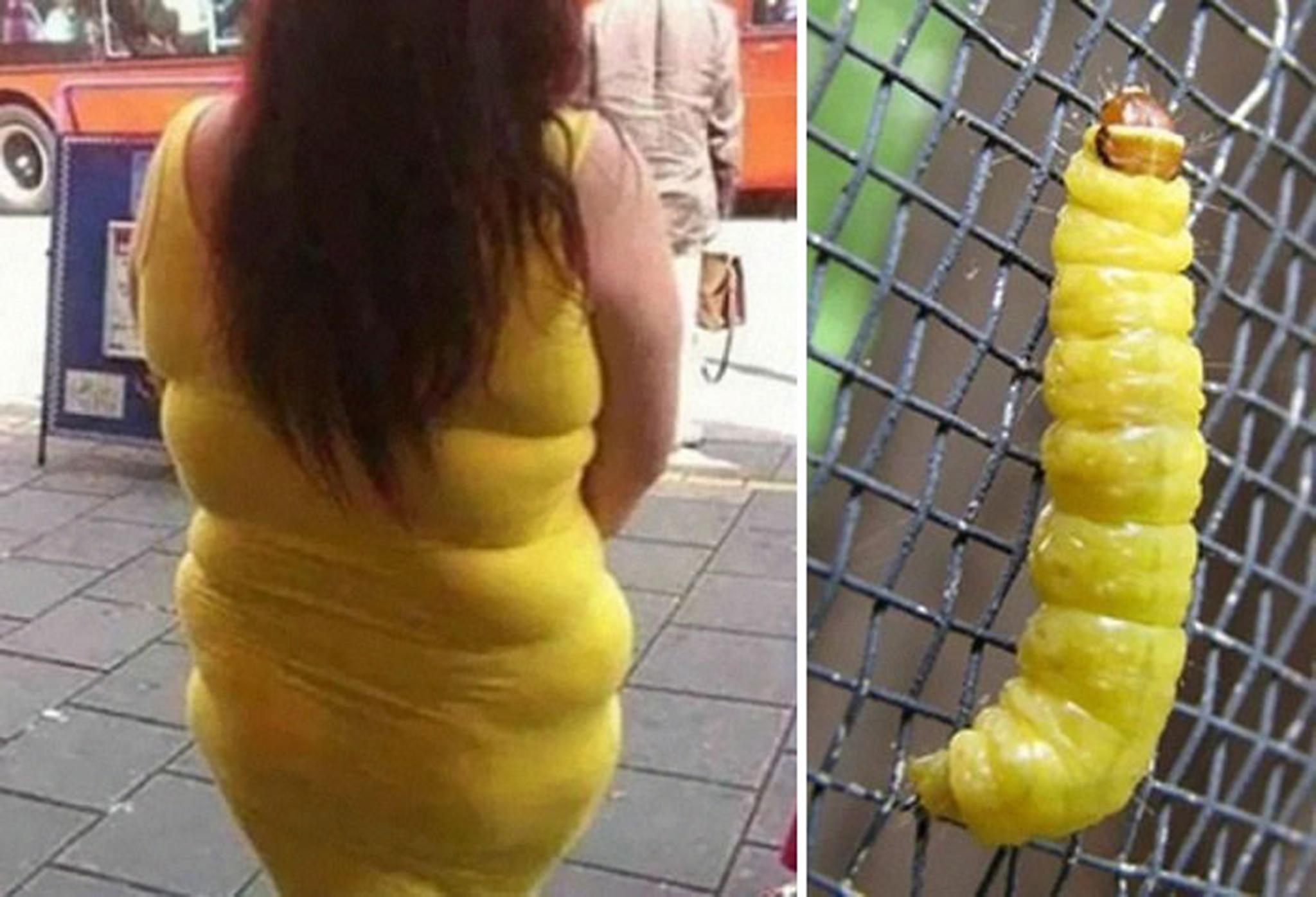 5 Yellow Dress And Caterpillar