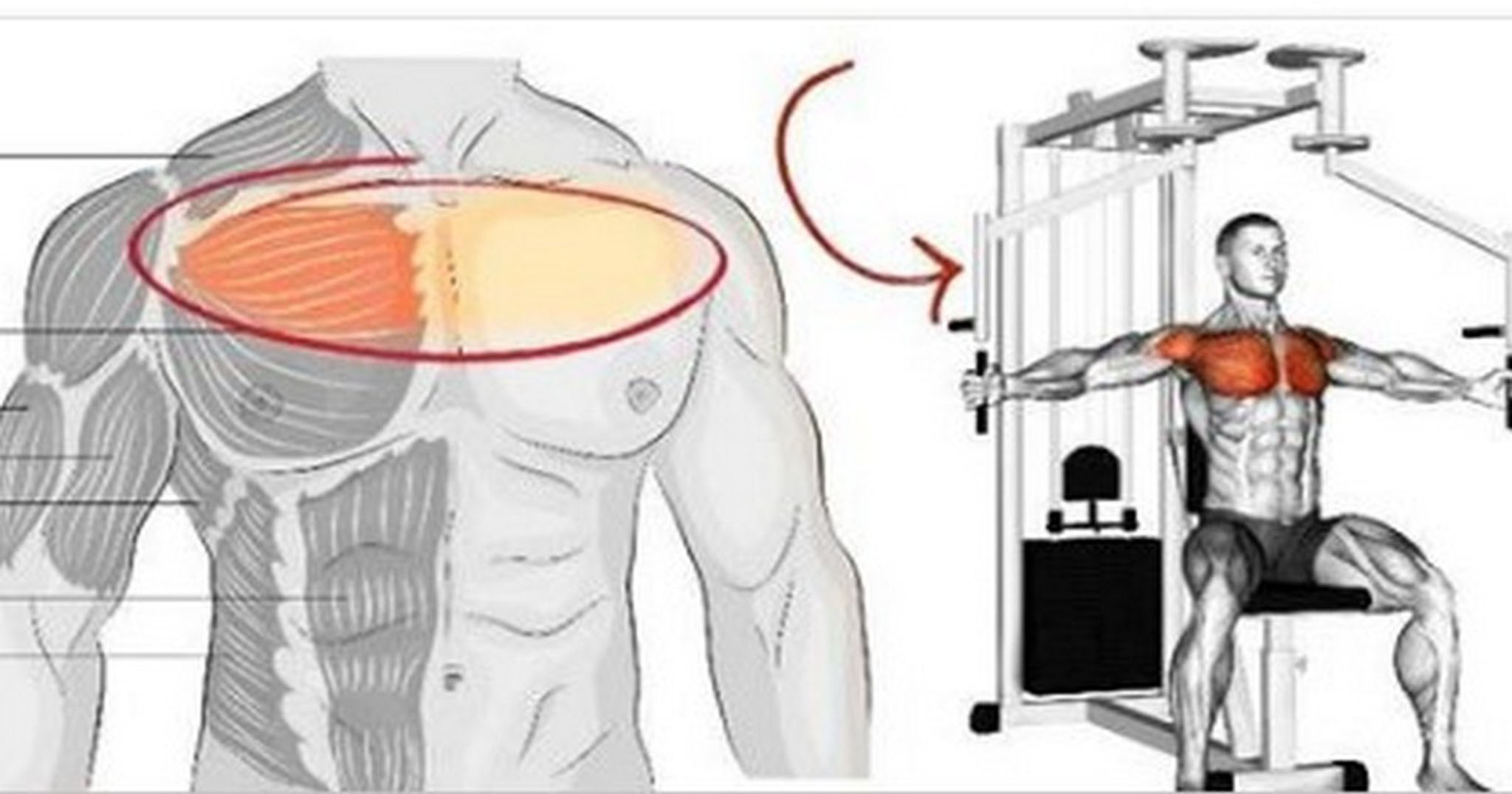 4 Common Mistakes You Must Avoid While Training Your Chest ...