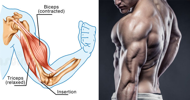 how to build biceps and triceps with push ups gymbuddy now